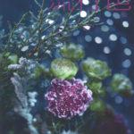 掲載のお知らせ JAFCA ColorTrendMagazine「流行色」2020 WINTER No.603